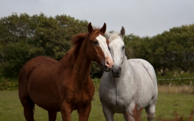How to take care of a senior horse?