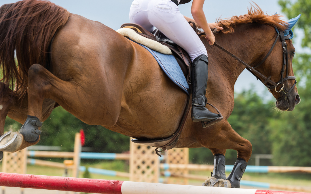 Jumping Horses' Joints and Hooves
