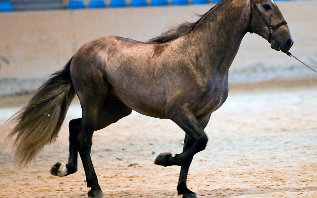 Hidden defects to look out when buying a horse